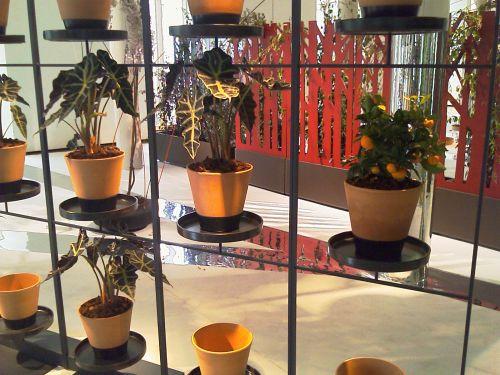 Biombos Naturales: Family Pot by Teracrea